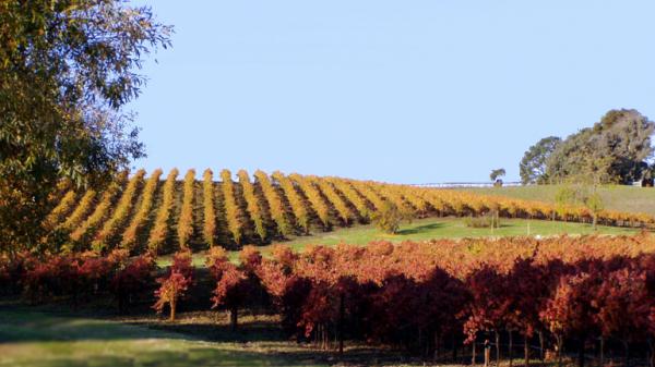 vineyard-las-madres-fall-600w